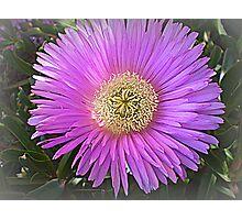Succulent - Lovely colour  Photographic Print