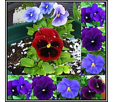 Plethora of Pansies Collage Photographic Print