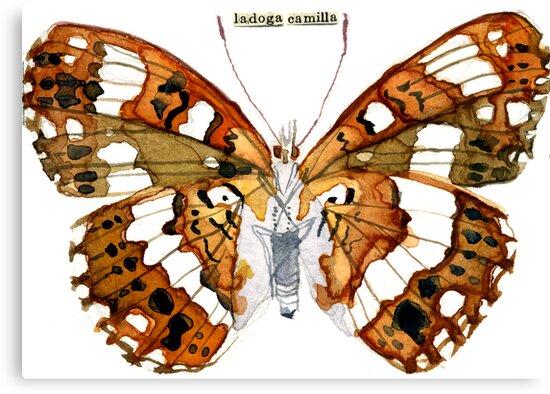 Ladoga Camilla (White Admiral Butterfly) by Carol Kroll