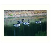 Geese on the pond Art Print