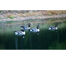 Geese on the pond Photographic Print
