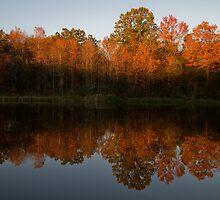 Fading Autumn Light by David Stegmeir