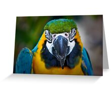 Parrot Portrait .......  Greeting Card
