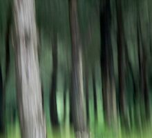 Trees in the trulli forest  by Rene Hales