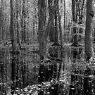 Serene Woodlands by David Schroeder