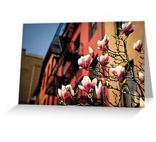 Japanese Magnolias - Spring - New York City Greeting Card