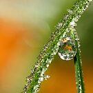 Frosty Orange by Sharon Johnstone