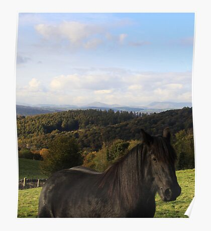 Beautiful view for the horse! Poster