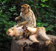 Happy Family - Primates by vbk70