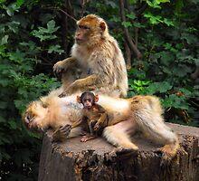 Happy Family - Primates by vbk70