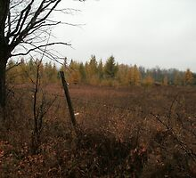 Field of Tamaracks Do Not Cross by linmarie