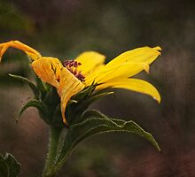 Late bloomer by zzsuzsa
