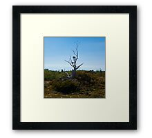 Another Tree Framed Print