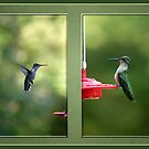 Hummingbird Two-fer by WalnutHill
