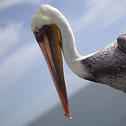 Pelican with 'tude by Joe Randeen
