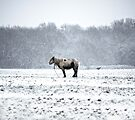 A Very Cold Pony by Nigel Bangert