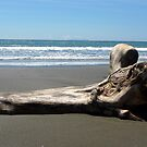 Drift Wood by Digby