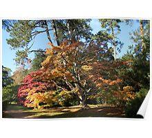 Autumn Beauty in Westonbirt. Poster