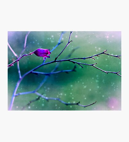 Coral Bell Reaching Out  Photographic Print