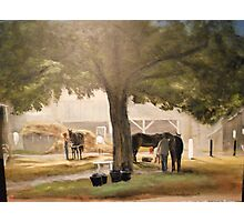 Thoroughbreds at Early Dawn, Saratoga Photographic Print