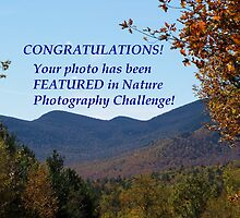 Nature Photography Challenge Feature Banner by hummingbirds
