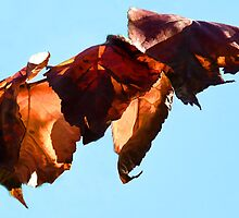 Copper Chain Of Leaves by lynn carter