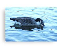 beautiful goose Canvas Print