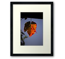 Lonely but Beautiful Framed Print