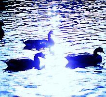 silhouette geese by xxnatbxx