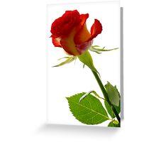 Rose - Impressions # 2 Greeting Card