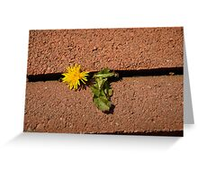 Nature Wins Greeting Card