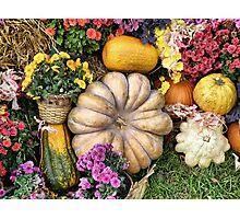 Harvest Photographic Print