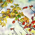 Is that fall I see? by vigor