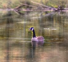 I am Talking To You by Gary Smith