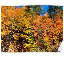 Autumn Abundance Poster