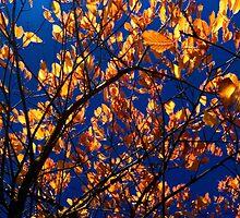 Autumnal by marc melander