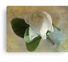 Sweet Gardenia Canvas Print