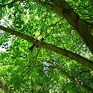 Magpie Adelaide Botanic Gardens by Shelleymay