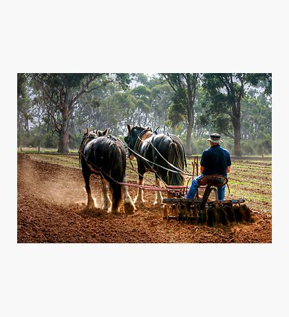 Ploughing the Field at Churchill Island Photographic Print