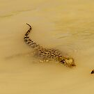 Baby Croc - Adelaide River NT by Jenny Dean