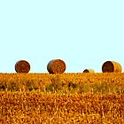 Hay bales on the prairie by soniarene