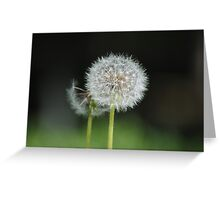 Puff Balls Greeting Card