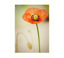 Poppy... Art Print