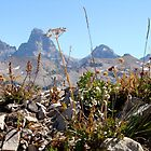 Tetons amongst flowers by jhprints