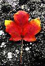 Fallen Leaf - Blank Greeting Card by Marcia Rubin