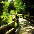 A peaceful stroll ©  by Dawn M. Becker