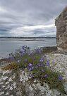 Holy Island Castle - Battlements by Nigel Bangert