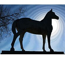 White Horse - Silhouette Photographic Print