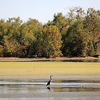 Heron at Brush Creek by DebbieCHayes