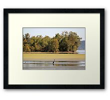 Heron at Brush Creek Framed Print